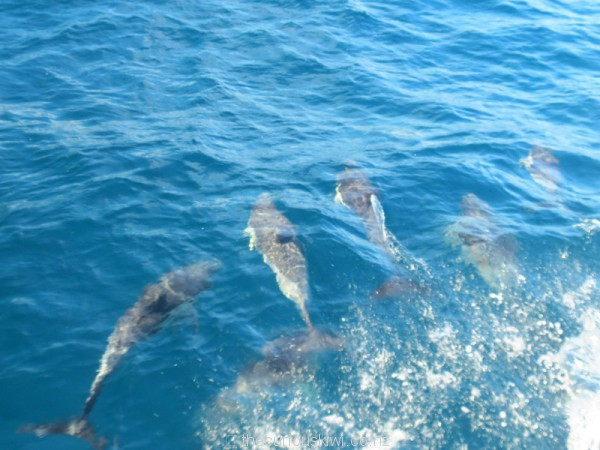 Just a few of the hundreds of dolphins we saw