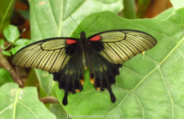 Unusual wing design