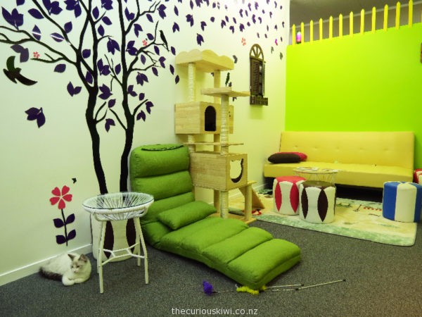 Fancy Meow Cat Cafe, Rotorua