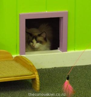 Taking a break at Fancy Meow Cat Cafe