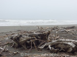 Driftwood on the beach next to Shining Star