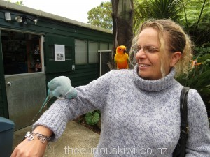 Cute and friendly birds at The Parrot Place