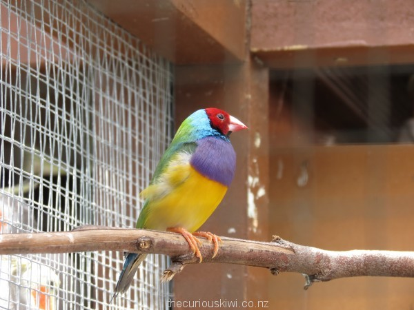 Colourful bird at The Parrot Place