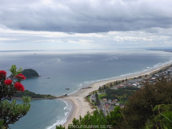 A December view from the summit - flowering Pohutukawa tree