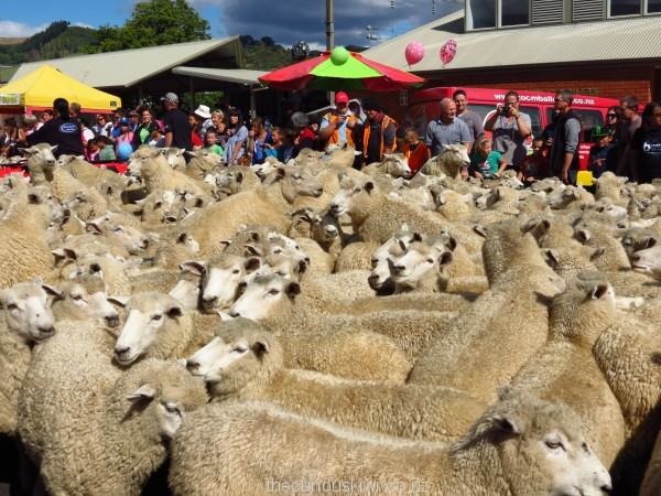 Running of the Sheep 2013