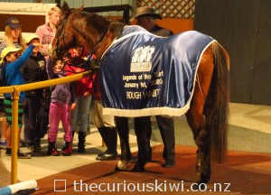 Rough Habit at Horse Magic Show