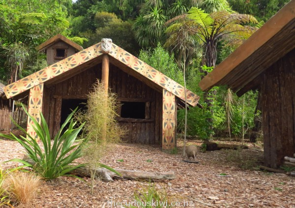 Maori village with resident kiwi