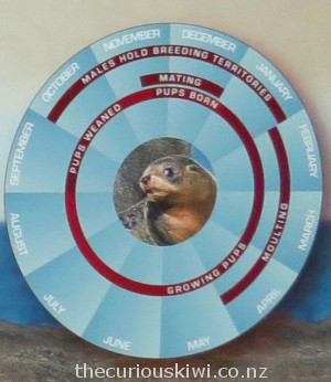 Calendar of seal development