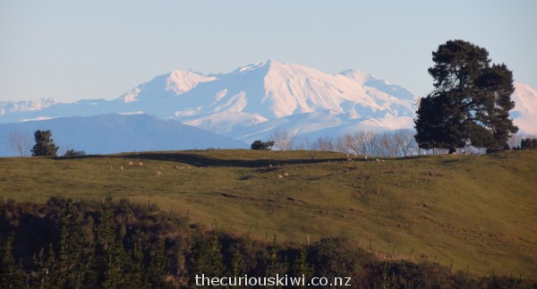 Close up of the snowy mountains in Tongariro National Park from Craters of the Moon lookout