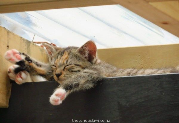 Snoozing in the roof space