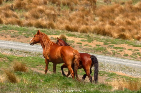 A lot of horses were near the gravel road we travelled on