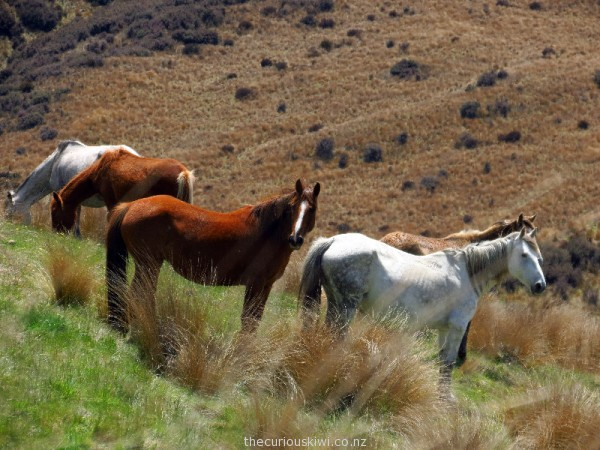 One of the first groups of horses we saw