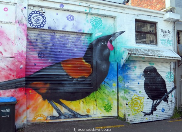Tieke (Saddleback) & Black Robin by Charles & Janine Williams
