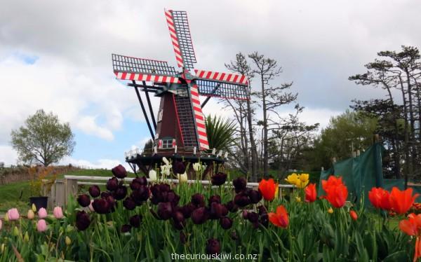 Tulip display at PlentyFlora