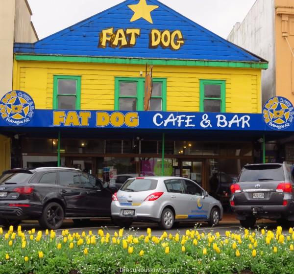 Tulips outside Fat Dog Cafe on Arawa Street