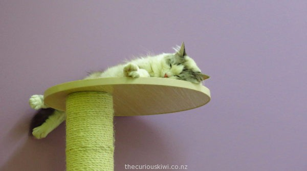 Let sleeping cats lie at Fancy Meow