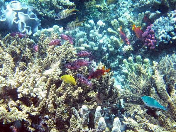 Tropical fish near Mystery Island