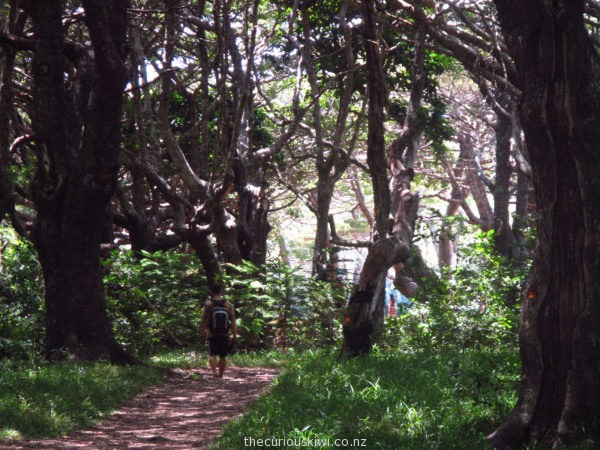 Take a short walk through the trees to Kanumera Bay