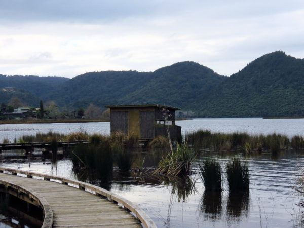 Bird hide and boardwalk - Lake Okareka Walkway