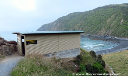 Roaring Bay Penguin Hide